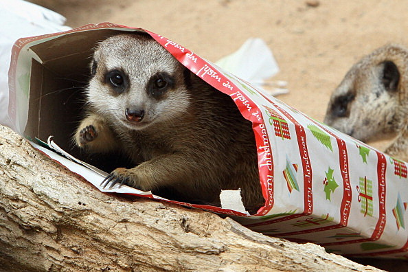 Zoo Animals Treats For Christmas