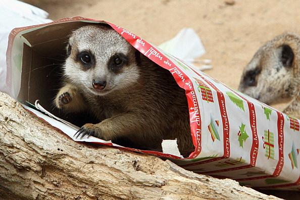 Zoo Animals Treats For Christmas