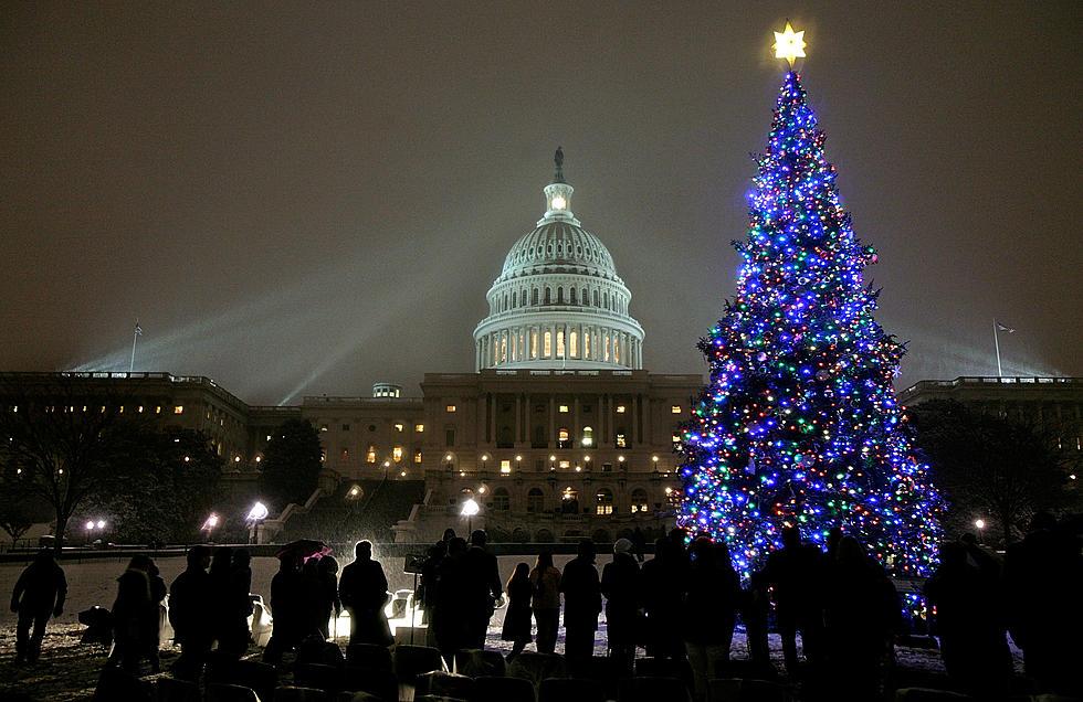 the capitol christmas tree is heading from minnesota to washington dc - Christmas In Washington Dc